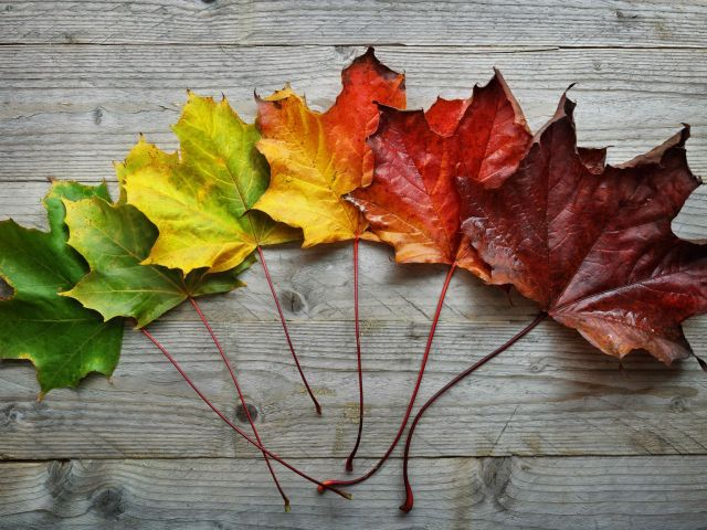 showing leaves turning from green to red